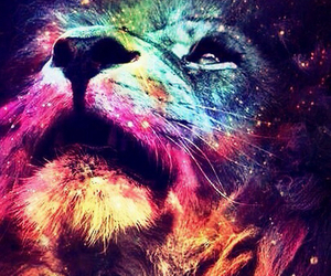 lion, colors, and animal image