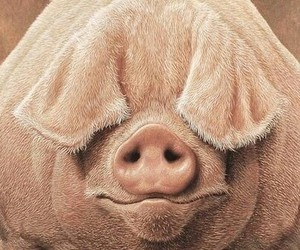 blind, funny, and pig image