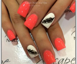 design, feather, and nails image