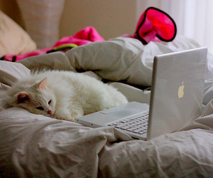 cat, white, and apple image