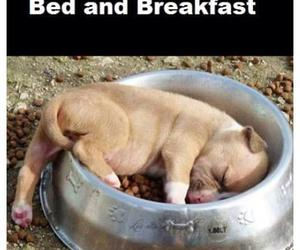 dog, funny, and breakfast image
