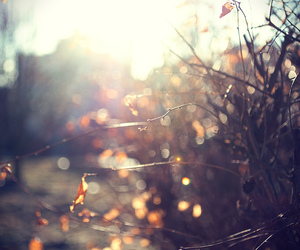 autumn, fall, and glow image