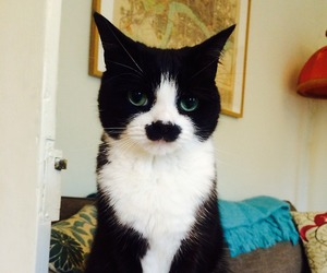 cat, funny, and mustache image