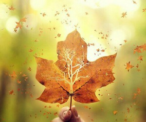 autumn, awesome, and leaf image