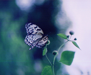 butterfly, flowers, and leaves image