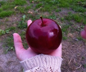 apple and red image