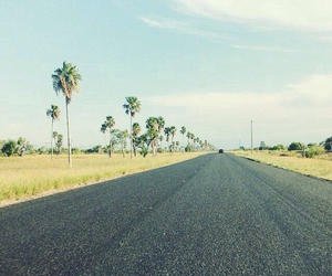 palm trees, road, and mcallen image