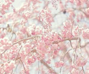 flowers, pink flowers, and tree flowers image