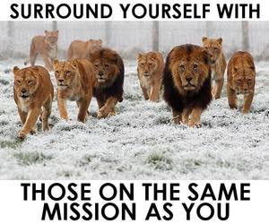 quotes, mission, and lion image