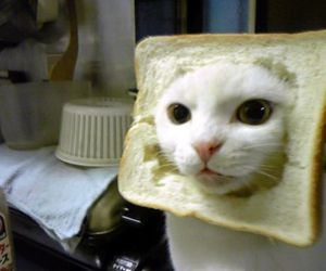 bread, toast, and cat image