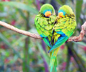 amazing, bird, and colors image