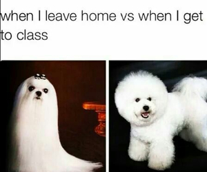 curly, dog, and funny image