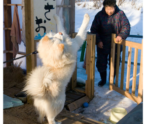 dog, funny, and winter image