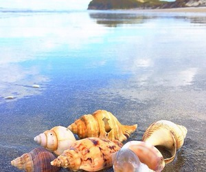 beach, photography, and shells image