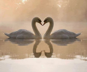 animals, birds, and animal love image