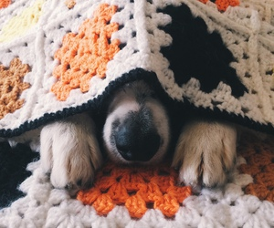 blanket and puppie image