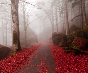 red, forest, and nature image
