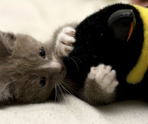 animal, baby kitten, and cute image