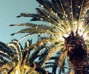 beach, beautiful, and palms image