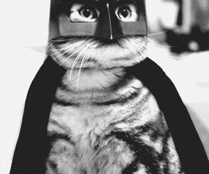 cat, batman, and batcat image