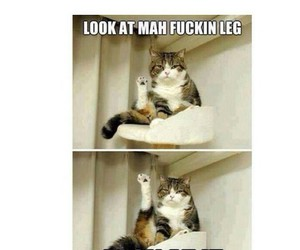 funny, cat, and girl image