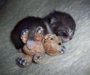 kitty, sleeping, and cute image