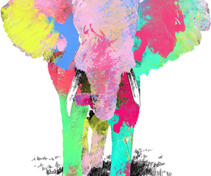 color, elephant, and nature image