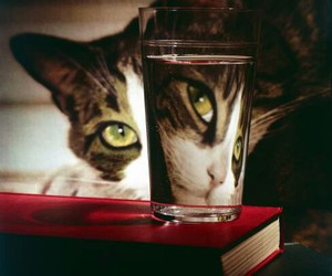 cat and glass image