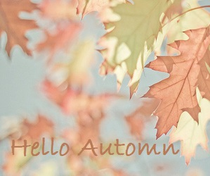 automn, leaf, and season image