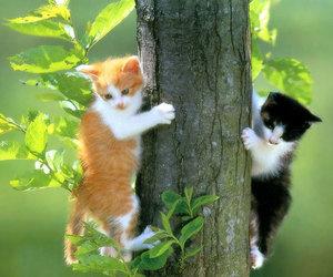 cat, animal, and tree image