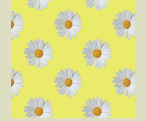 daisy, pattern, and wallpaper image