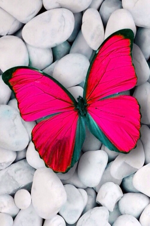 101 Images About Butterflies On We Heart It See More About
