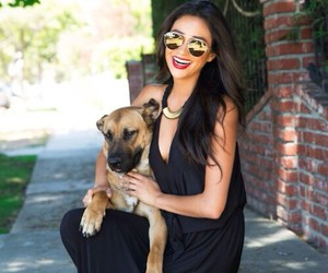shay mitchell and dog image