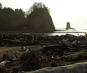 beach, la push, and twilight image