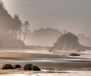 beach, forks, and la push image
