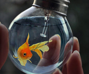 black, gold, and gold fish image