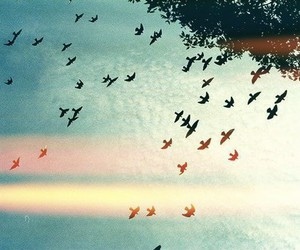 birds, fly, and free image