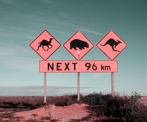 australia, animals, and pink image