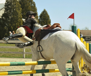 horse, equestrian, and fail image