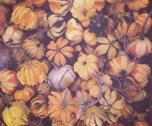pumpkins, tumblr, and fall is here image
