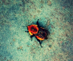 colors, insects, and colourful image