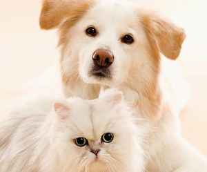 dog, cute, and cat image