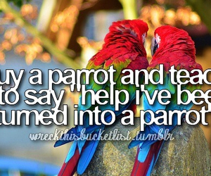 funny, parrot, and bucket list image