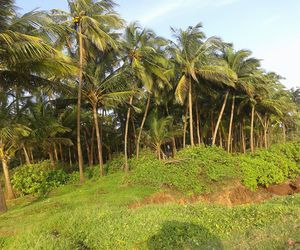 coconut trees and beach greenery image
