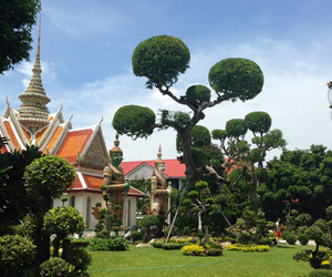 bangkok, horticulture, and beauty image