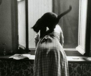 Luzfosca: Willy Ronis From Les Chats De Willy Ronis