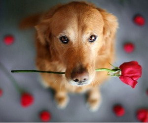 dog, rose, and cute image