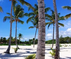 beach, beautiful, and bora bora image