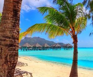 paradise, sea, and nature image