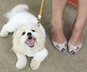 dog, sandals, and doggie image